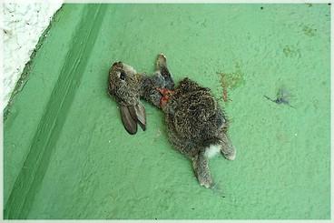 Katze Jagt Kaninchen